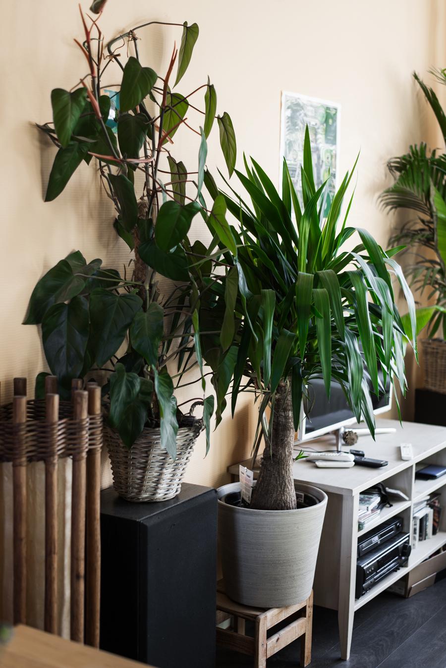 Zimmerpflanzen in grauen Töpfen vor gelber Wand