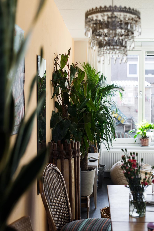 Grüne Zimmerpflanzen mit gelber Wand