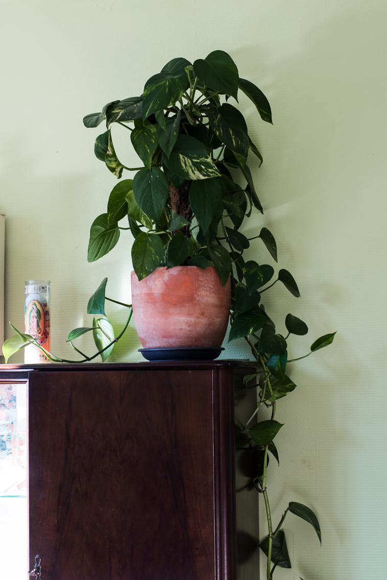 Pflanze vor grüner Wand auf einem alten, braunen Schrank