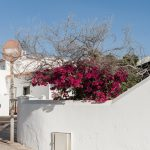 nine days summer- Teneriffa im Januar I