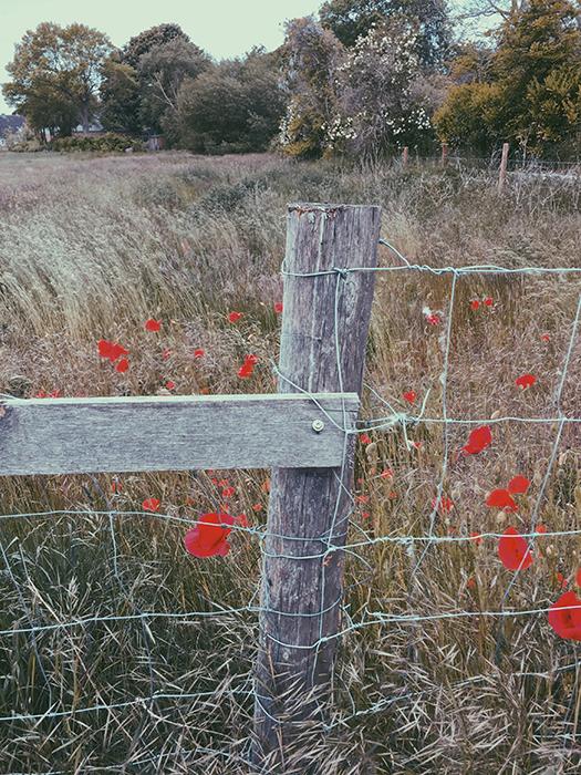 Wiese auf dem Land mit wilden Gräsern und Wildblumen